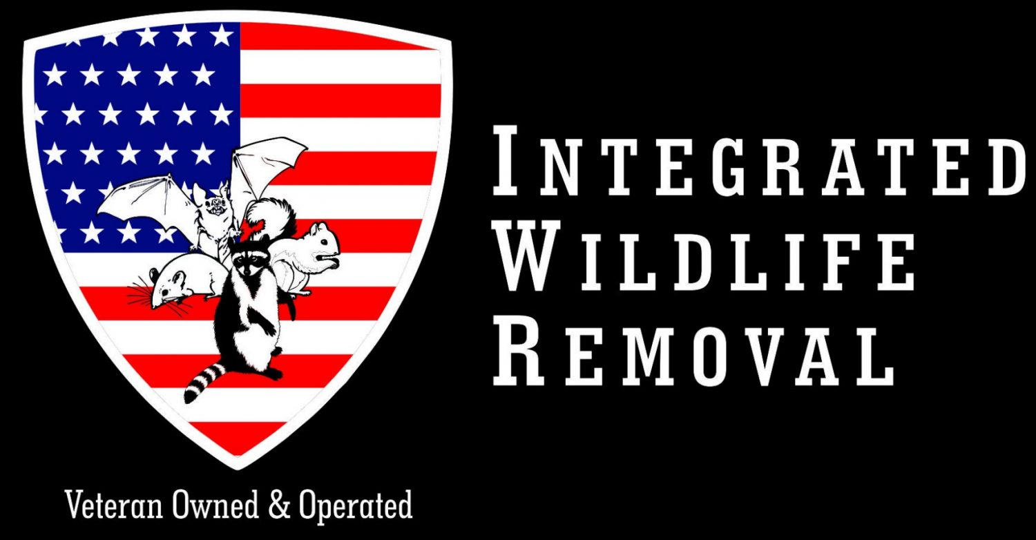 Wildlife Removal New Milford, CT